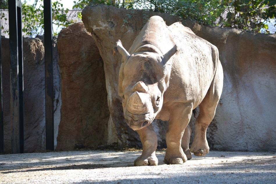El rinoceronte estaba bien amigable
