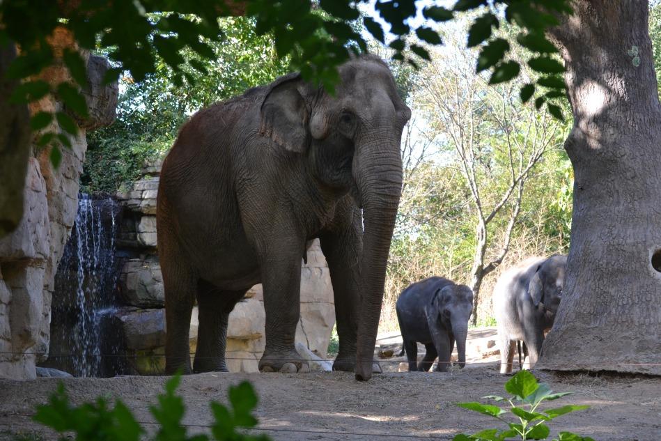 La familia elefante